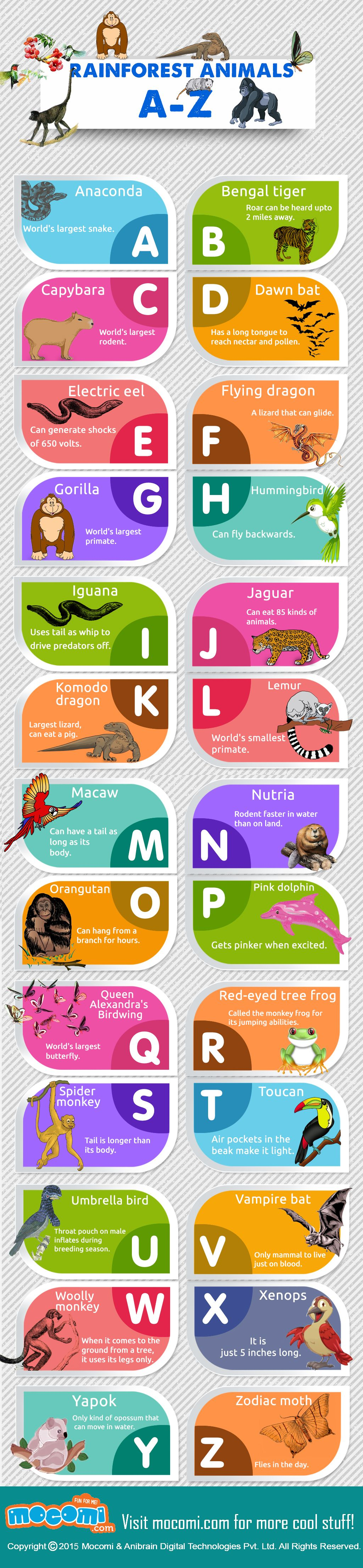 rainforest animals list a-z - general knowledge | infographics for