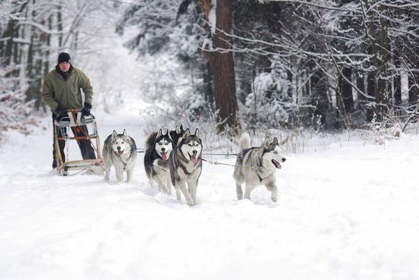 9 Activities For The Perfect Winter Honeymoon Husky Puppy Husky