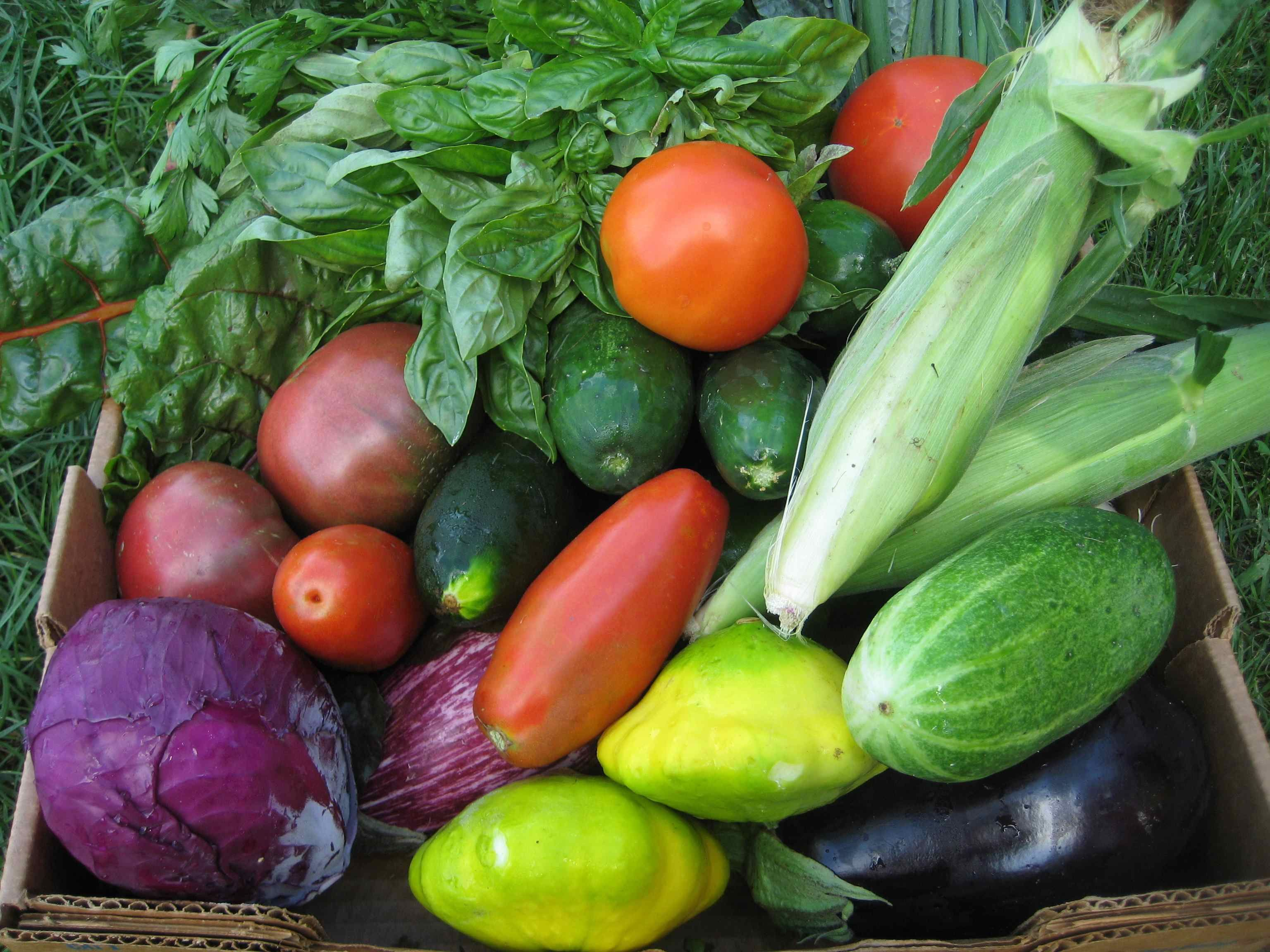 Become a member of Blandford Farm's CSA program! Enjoy fresh produce from the farm all summer long that is great tasting and healthy for you. #CSA #Community Supported Agriculture