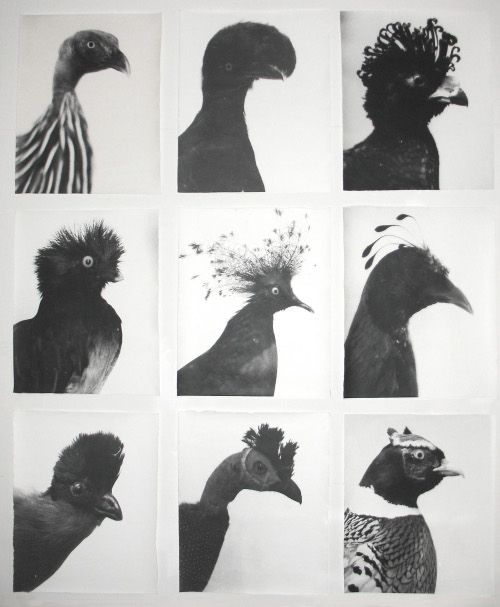 Oiseaux - Vögel, 1996-1999, Jochen Lempert, photographs from natural history museum collections, Germany