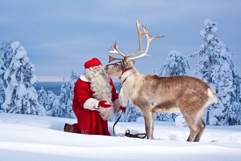 Real Reindeer And Santa
