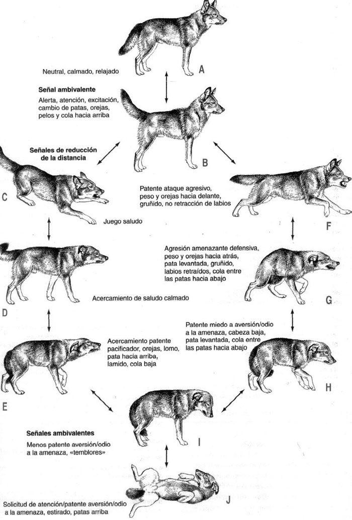 Lenguaje Corporal Canino Manual Visual Basico Simiperrohablara Lenguaje Corporal De Perro Lenguaje De Los Perros Perros