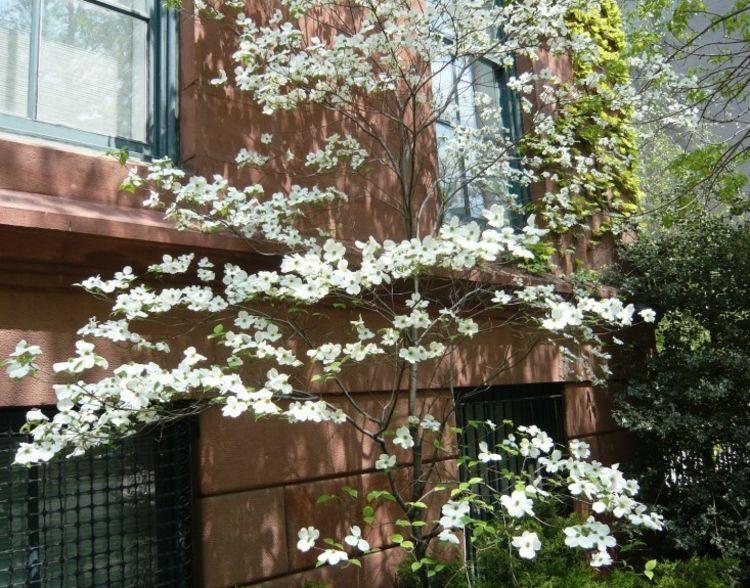 hartriegel-garten-fassade-stein-braun-modern-pflanzen-weiss, Garten Ideen
