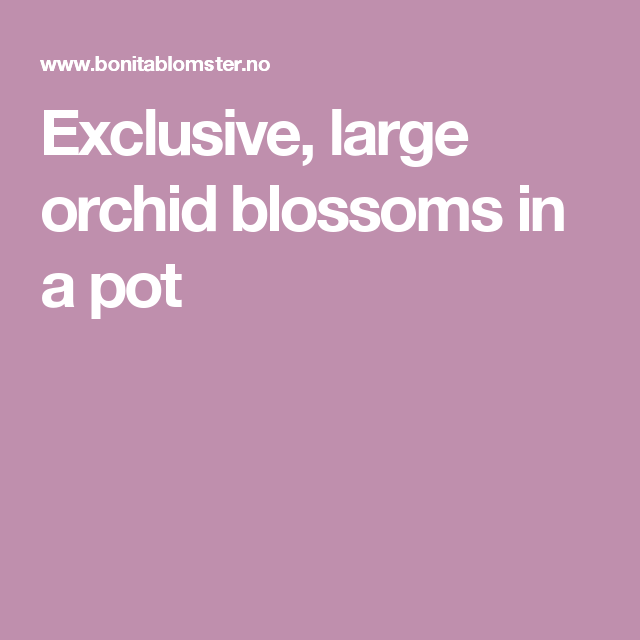 Barbara Mukudzei Gutu: Exclusive, Large Orchid Blossoms In A Pot