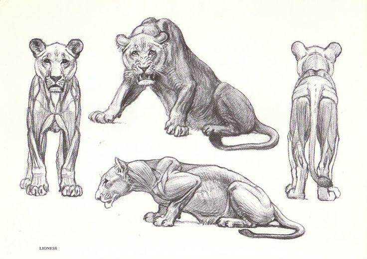 lion paw anatomy - Google Search | How Great Thou Art. | Pinterest ...