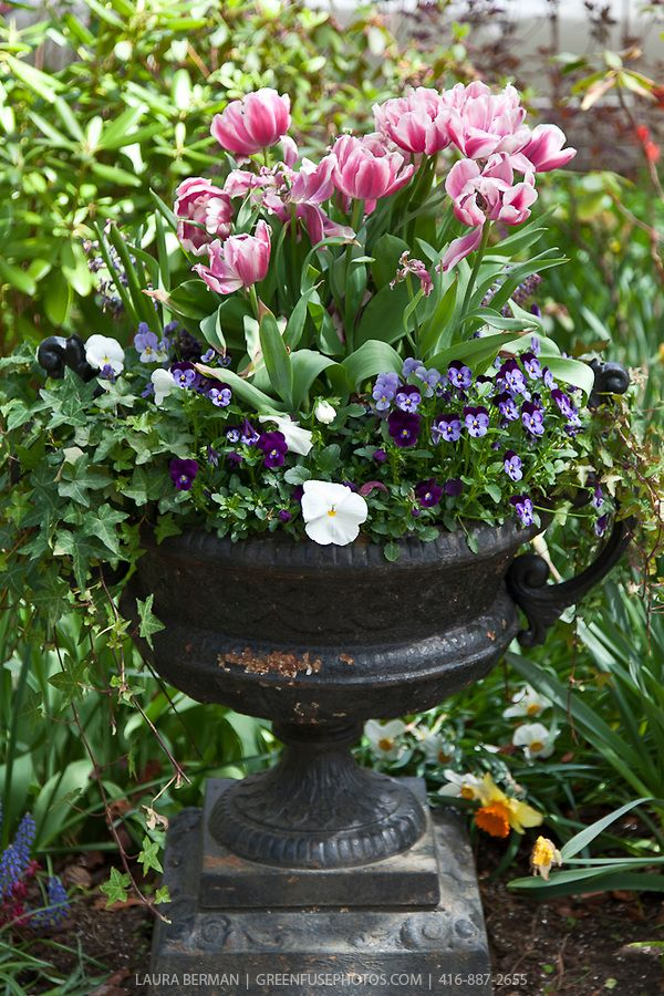 Decorative Wrought Iron Urn Planted With Pink And White 400 x 300
