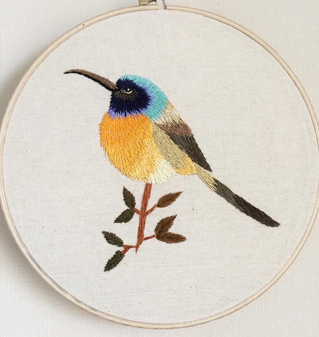 Sundbird Pecho Naranjo, pájaro sudafricano