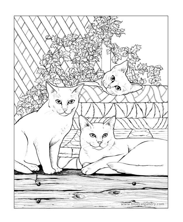 Bluecat Gallery - Adult coloring books by Jason Hamilton ...