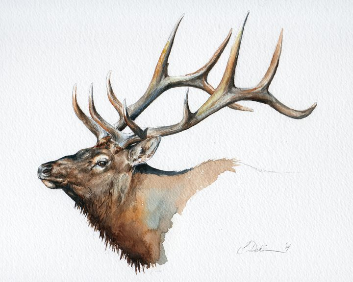 """Elk Head Study"", Watercolour"