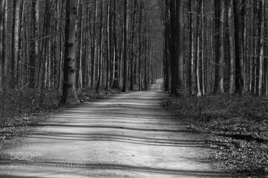 Forêt de Soignes  -  ombres droites by polomemp