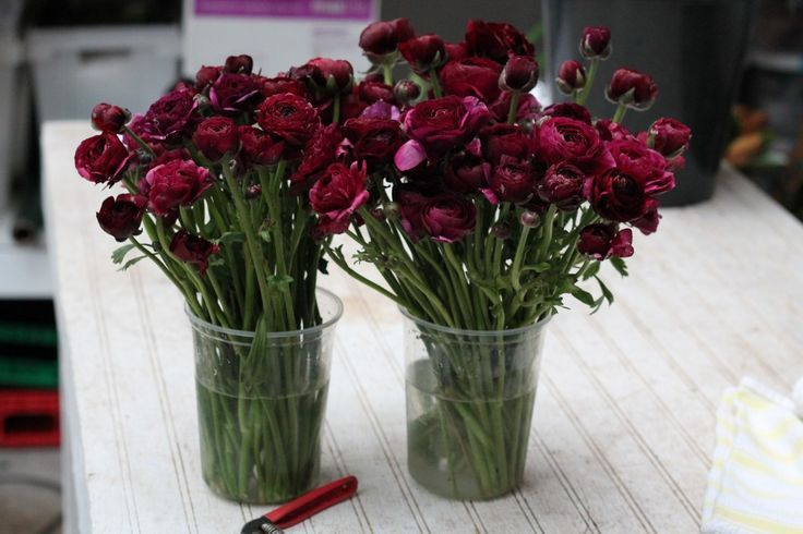 Burgundy Ranunculus Google Search Wedding Flowers Cost Colorful Wedding Flowers Wedding Flowers