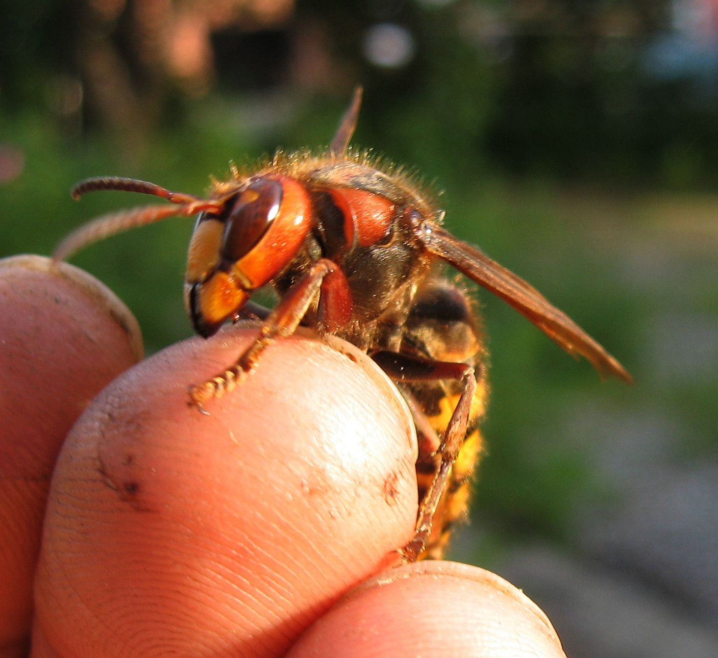 c9346e9543161329fcd04a23c39f1371 - How To Get A Pest Control License In Georgia