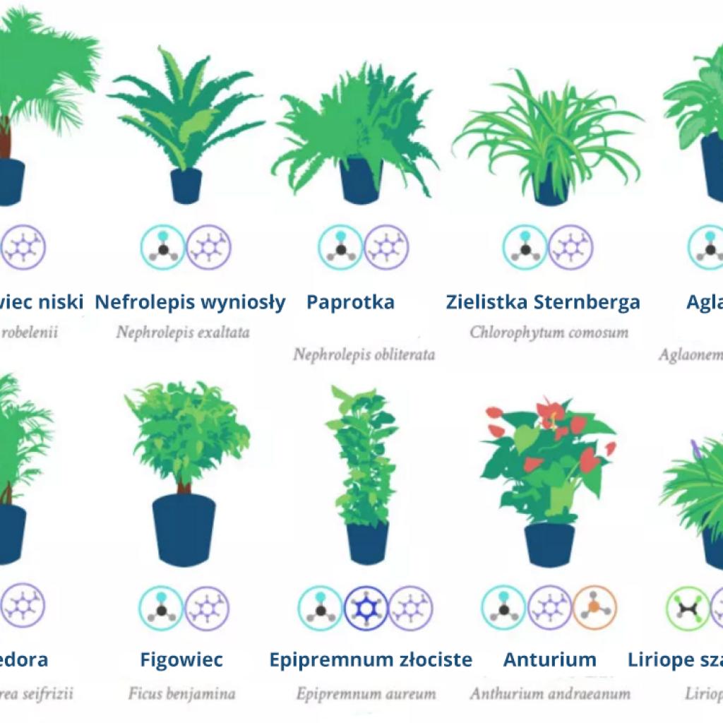 Rosliny Doniczkowe Oczyszczajace Powietrze Air Cleaning Plants Plants Air Purifying Plants
