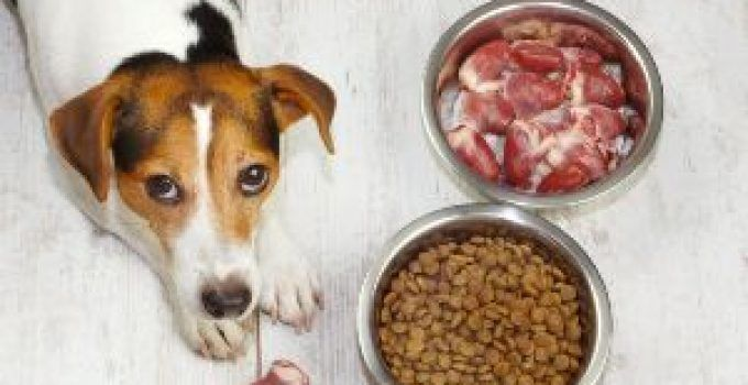 10 Best High Protein Dog Foods Reviews Updated 2020 gproductpic You may encounter a lot of wrong information about healthy eating that can cause different confusion Even...