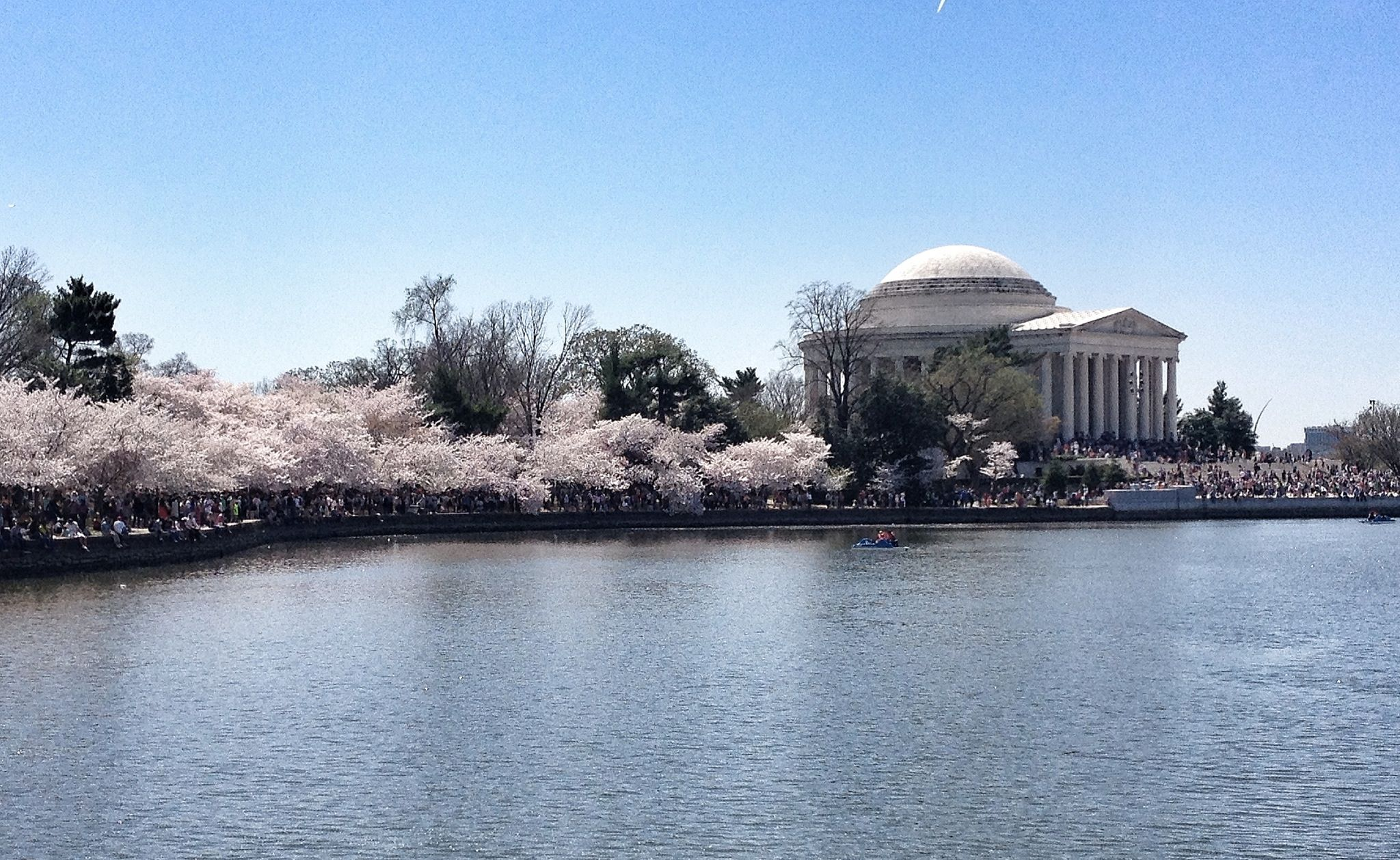 Jefferson building with Cherry Blossoms. Washington DC