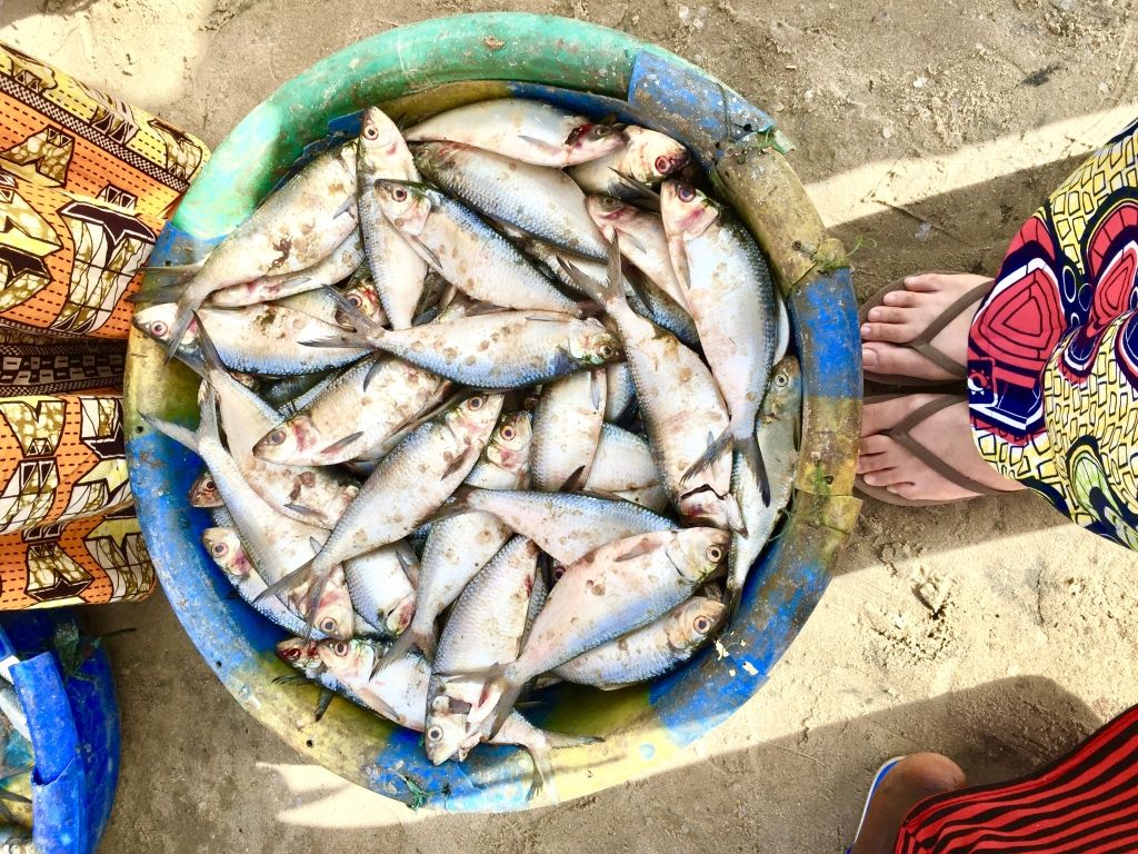 Catch of the Day: Fish at Tanji Fish Market. Cooking Class in The Gambia