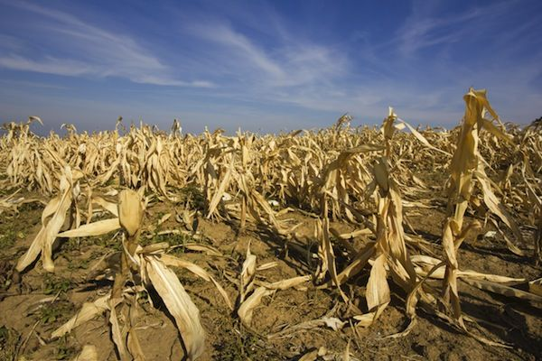 Drought on agriculture