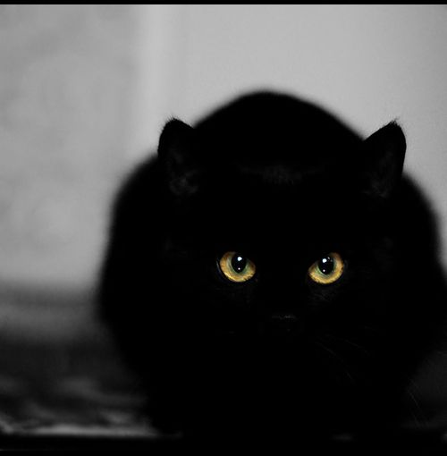 Can Black Cats Sense Evil