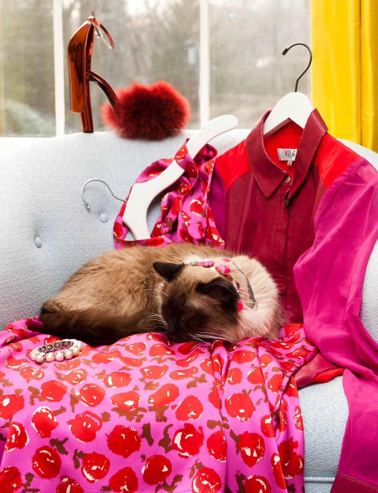 Prrr. www.thecoveteur.com/coveteur_pets