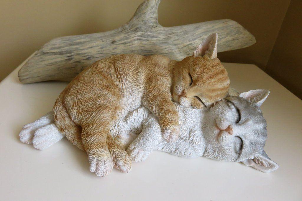 2 Cats Sleeping Kittens Grey Tabby 10 75 In Animals Sleeping Kitten Cat Sleeping Kittens