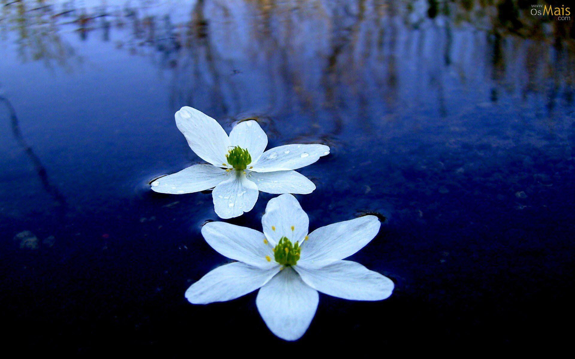 Papel de Parede Flores Aquáticas .
