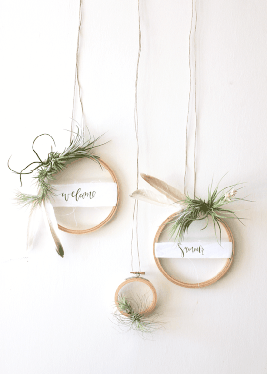 Photo of Tillandsia: 101 ideas to stage your air plants