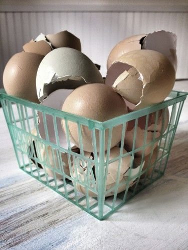 Egg shells = natural calcium supplements for your garden! Great for planting under tomato plants! @seattleseedling