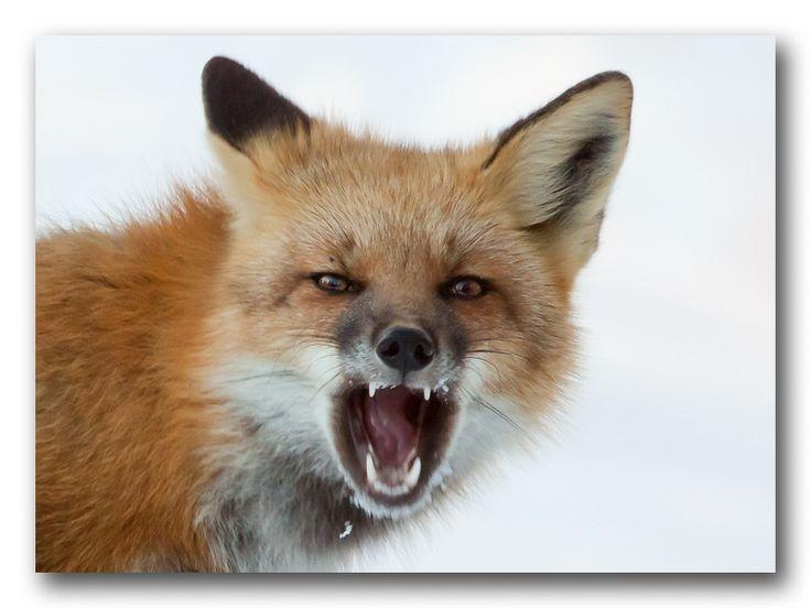 Angry Animals Google Search: Sharknado At The Fox Wedding