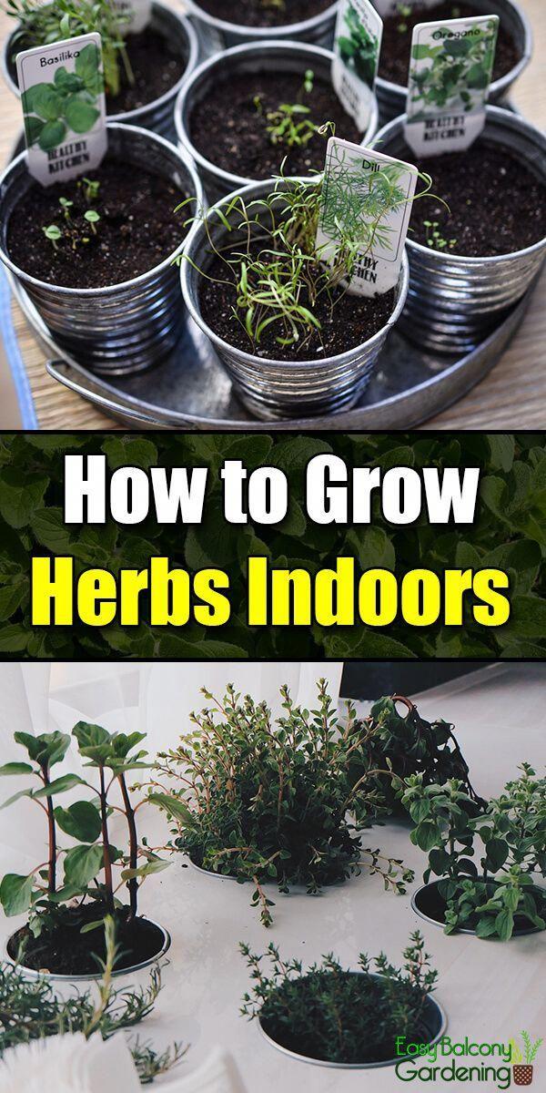 How To Grow Herbs Indoors Easy Balcony Gardening 400 x 300