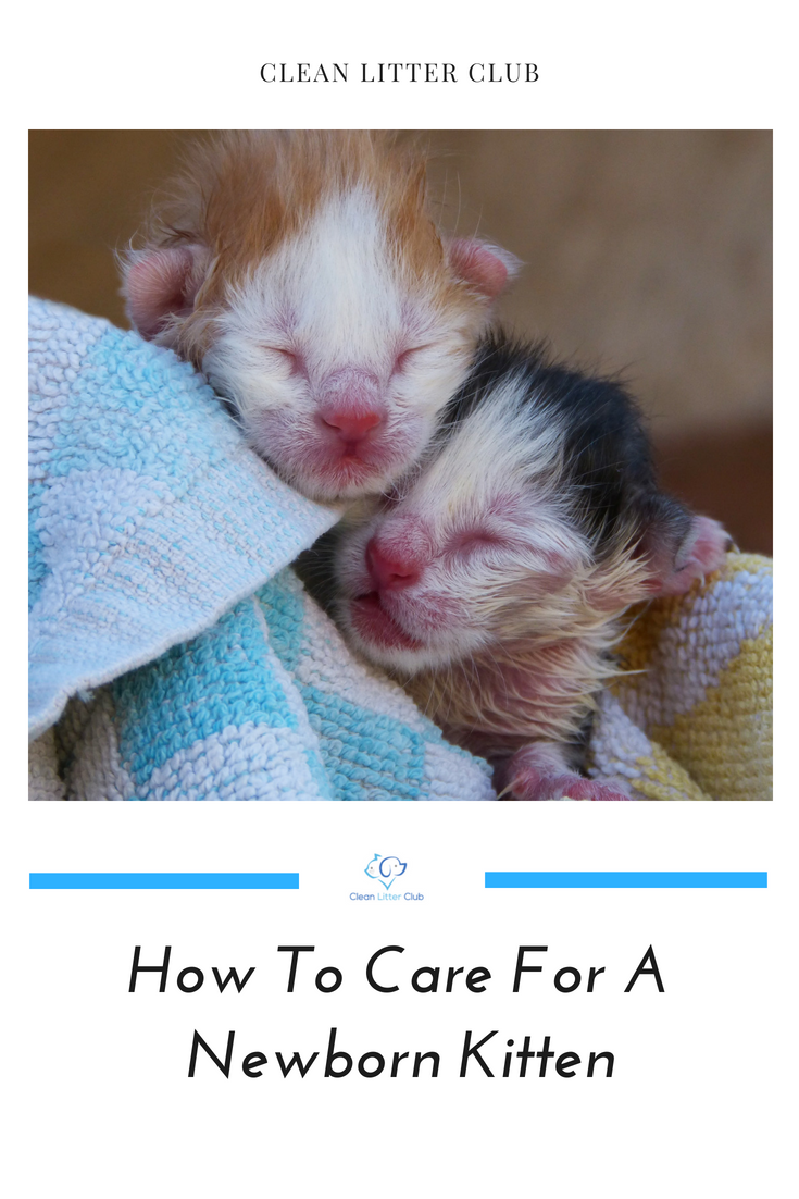 How To Care For A Newborn Kitten Clean Litter Club Newborn Kittens Kitten Care Kitten Season