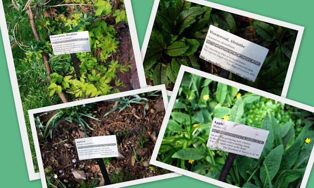 Plant and Flower Labels