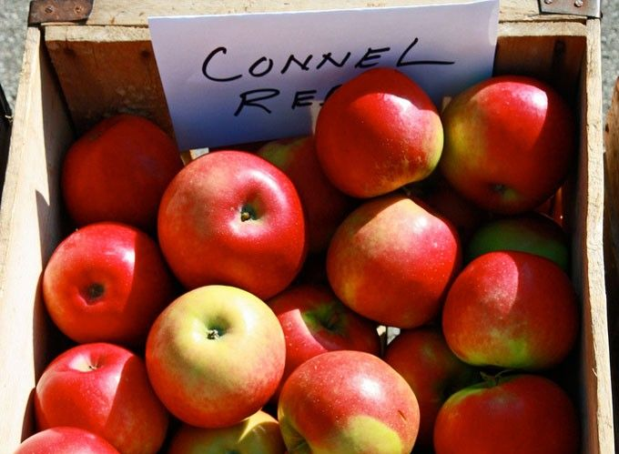 Connell Red Apple