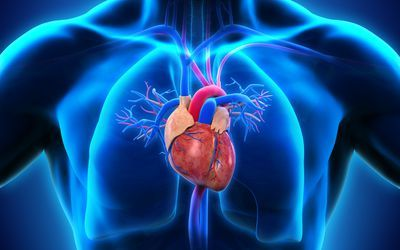 How the hearts electrical system works heart failure how the hearts electrical system works ccuart Images