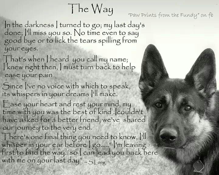 Touching Dog poems, Dog quotes, Pet remembrance