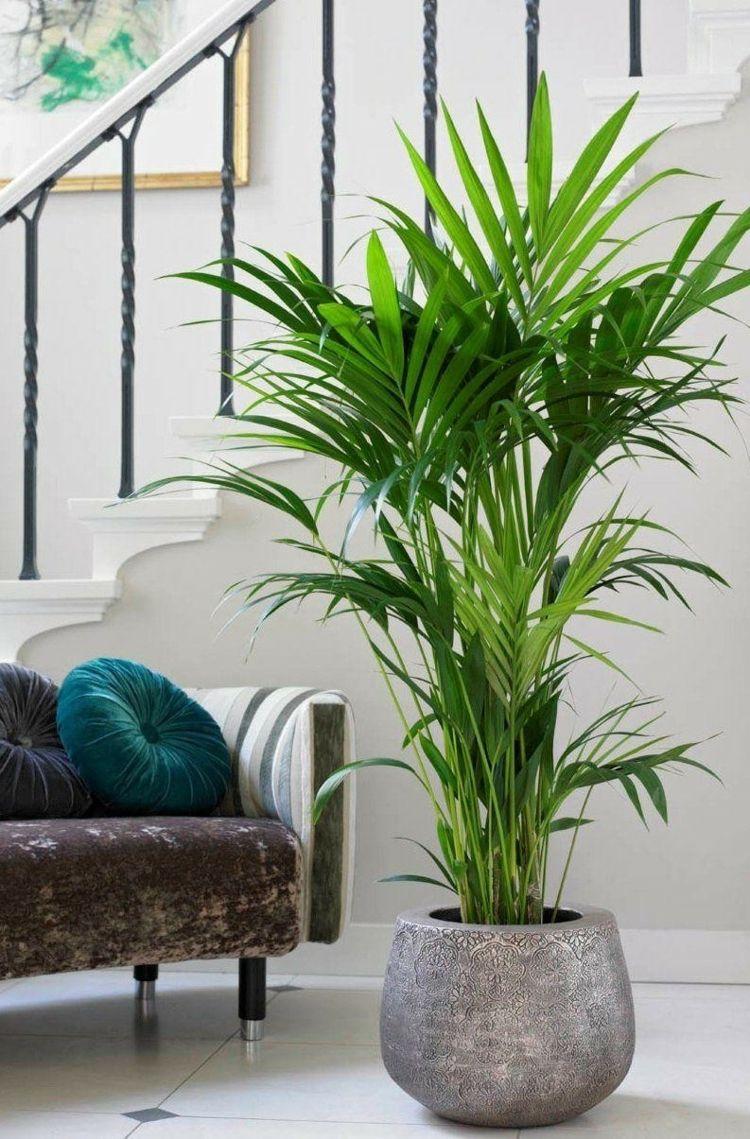 zimmerpalmen richtig pflegen - tipps für die kentia-palme, Wohnzimmer