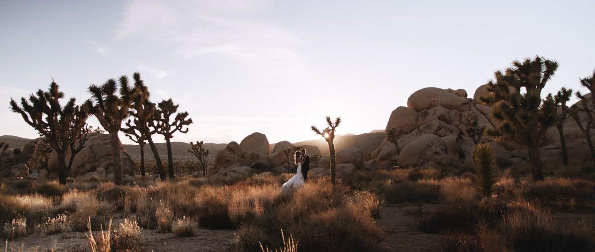 The Quail & The Dove Wedding videos, Wedding vendors