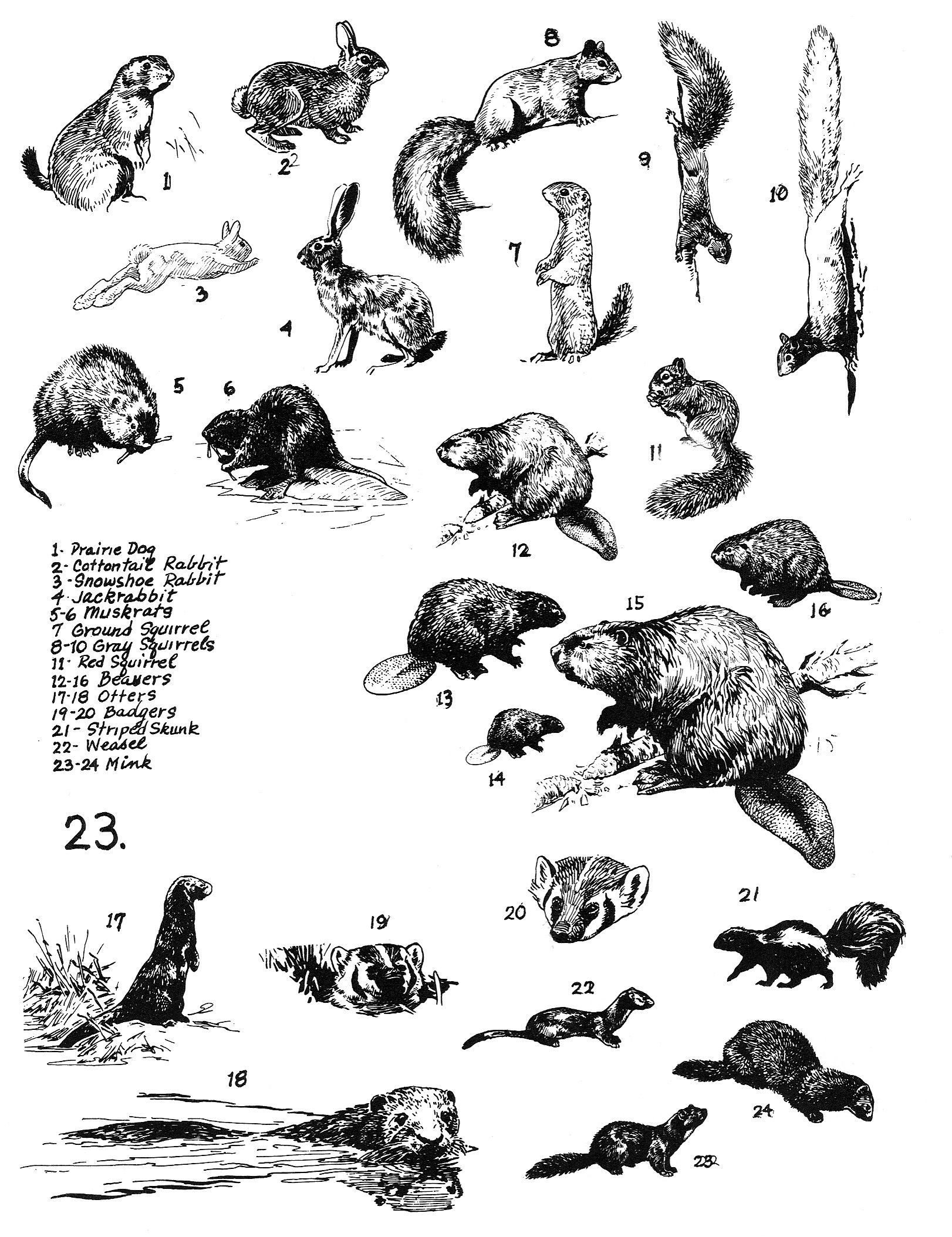 Robert W Bob Hines Illustrator For Us