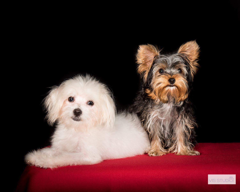 Pet photographer, pet photography. Dog photographer. Dog