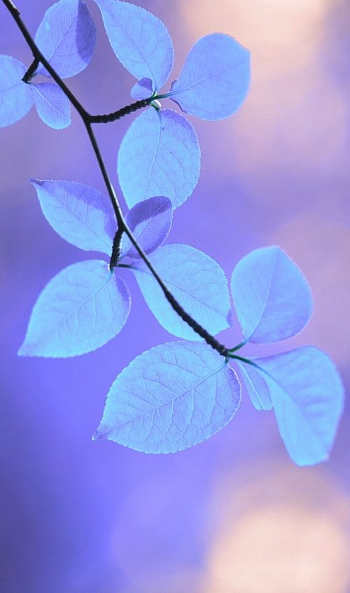 art, background, beautiful, beauty, blue background, blue flowers, colorful, design, flora, flowers, inspiration, lady, leaves, light, luxury, nature, pastel, photography, soft, still life, style, wallpapers, we heart it, pastel flowers, pastel color, bea