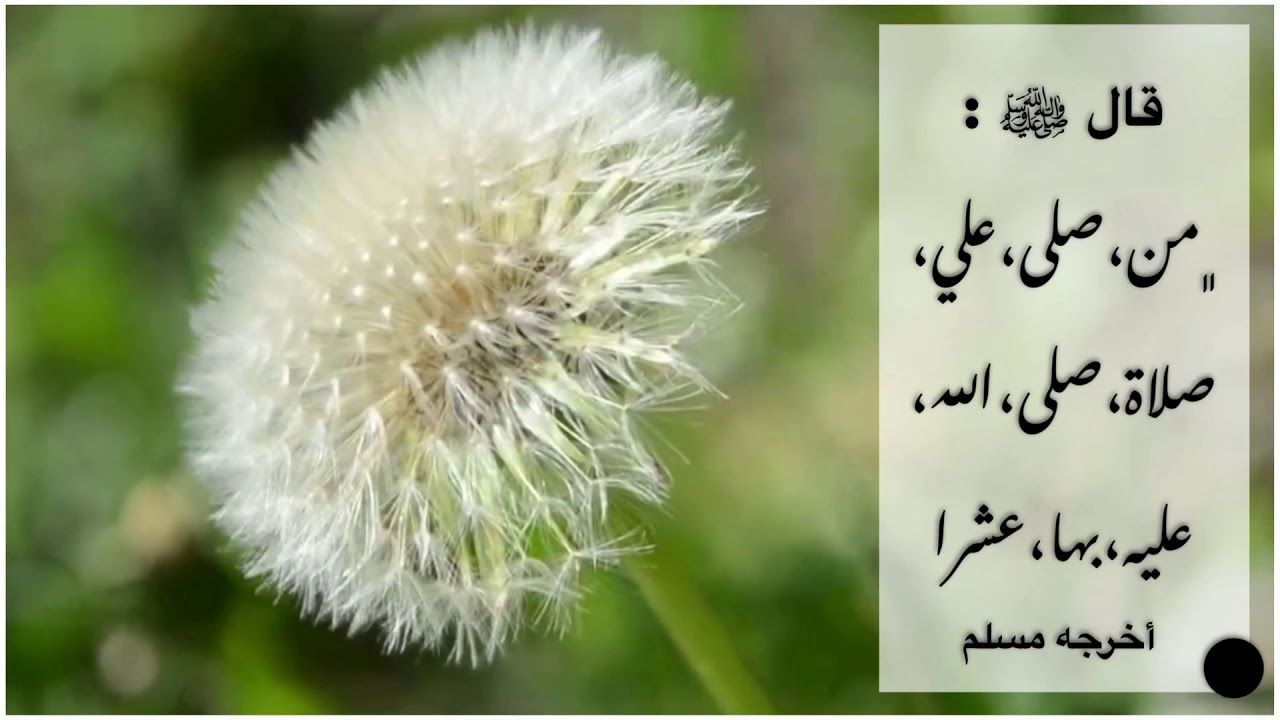 الصلاة على النبي يوم الجمعة Youtube In 2020 Plants Flowers Dandelion