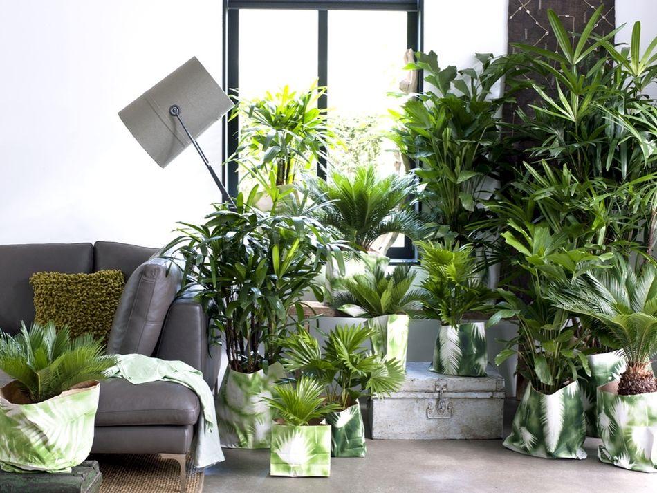 Polecamy Latwe W Uprawie Doniczkowe Palmy Plants Indoor Gardens Houseplants
