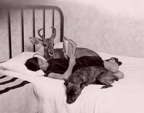 ginandbird:    you know… just reading a book with my dog and my deer… you?