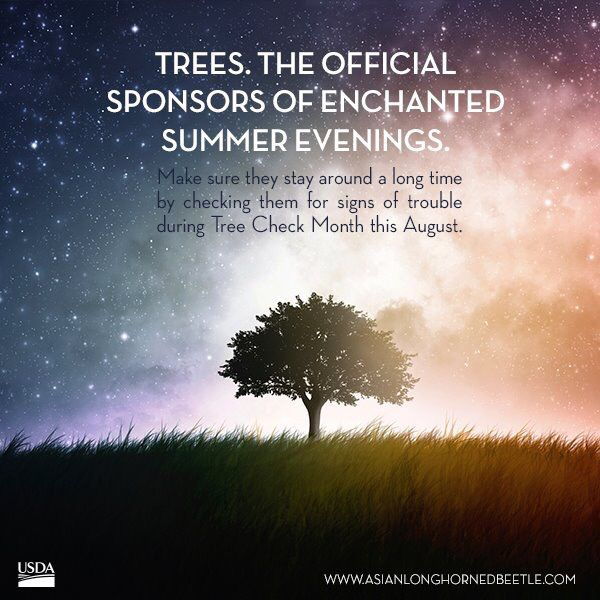 Check your trees!