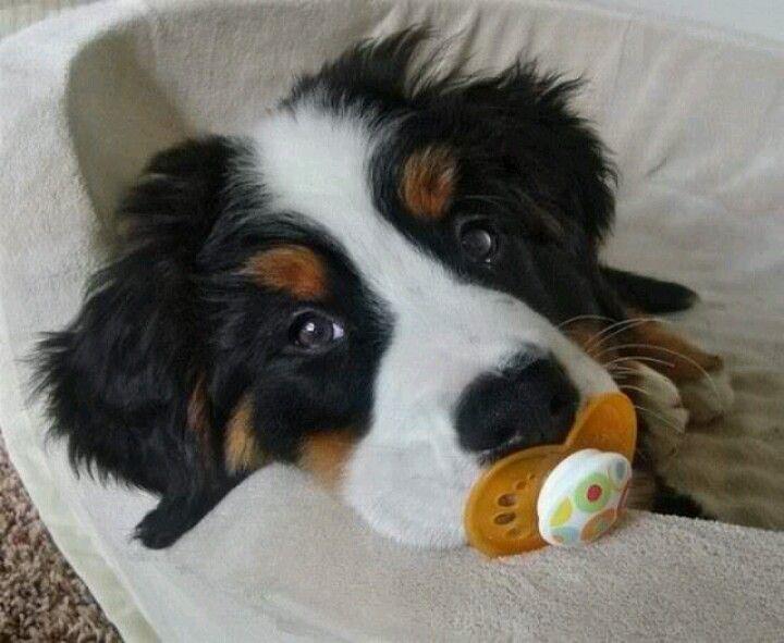 Stinking cute.