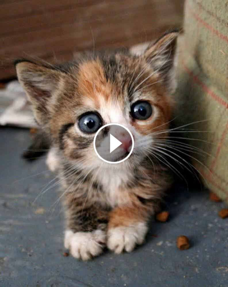 Video So Many Cute Kittens Videos Compilation 2019 71qxh9i4fs