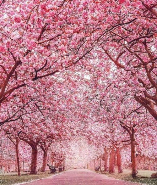 Photo Http Ift Tt 2rhwvgv Pink Blossom Tree Nature Landscape