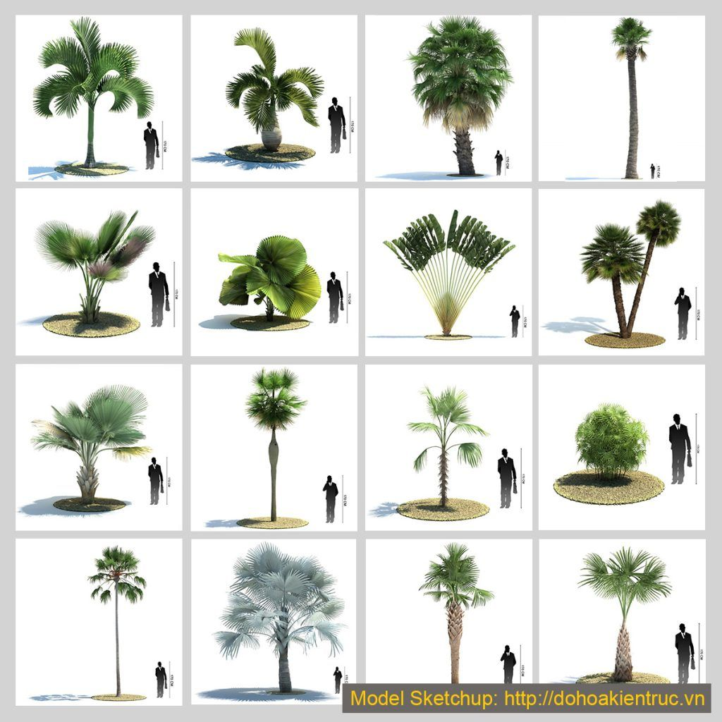 3D Model Tree Sketchup free download for Exterior | Plant | Model