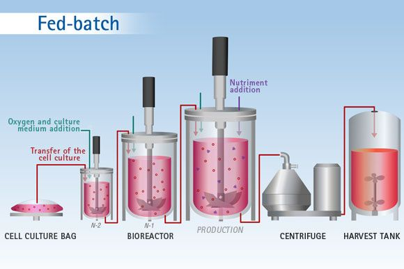 Ethanol Production by Repeated Batch and Continuous ...