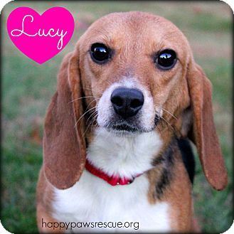 Adopt Jersey On Cute Beagles Cute Dogs Chi Dog