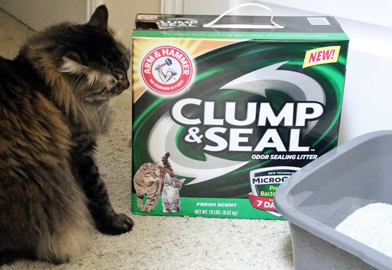 The perfect cat litter for a small space: ARM & HAMMER™ CLUMP & SEAL ...